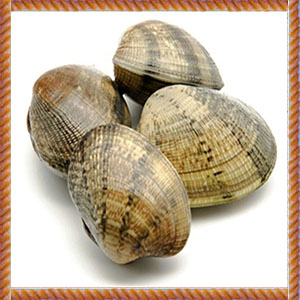 25CT_Clams