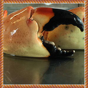 Collasal_Fl_Stone_Crab