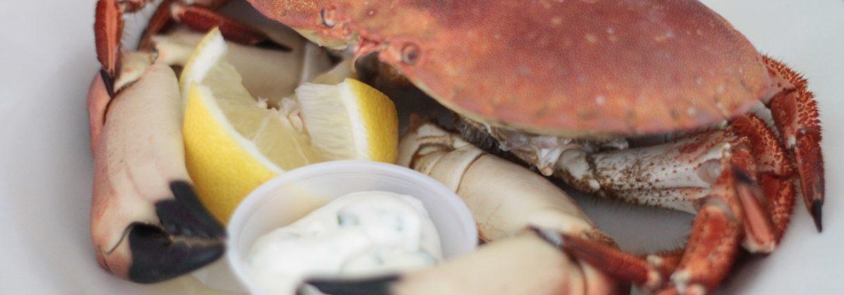 Florida Stone Crab